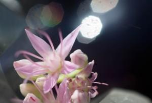 flower3 copy