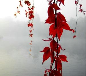 wpid-red_vines-wallpaper-10153534.jpg