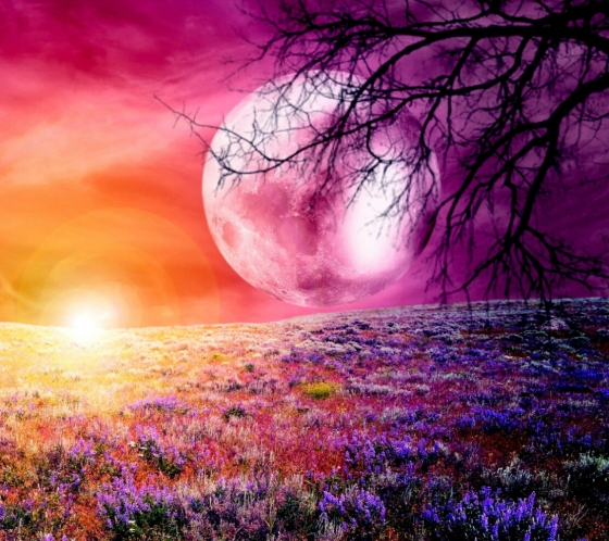 pink_moon-wallpaper-10474993.jpg