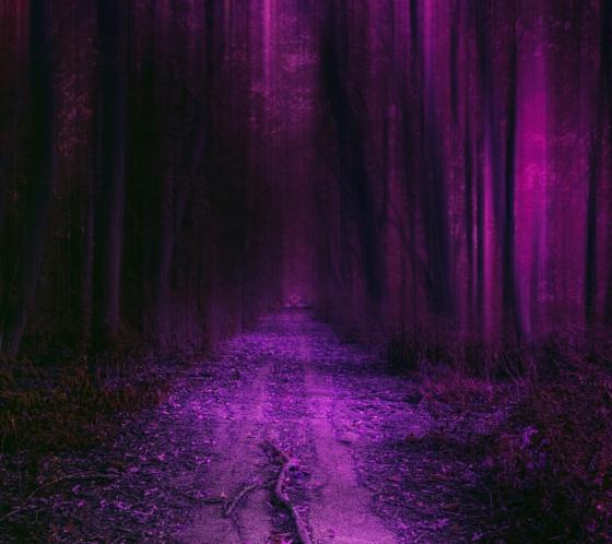 purple_hd_forest-wallpaper-10322310.jpg